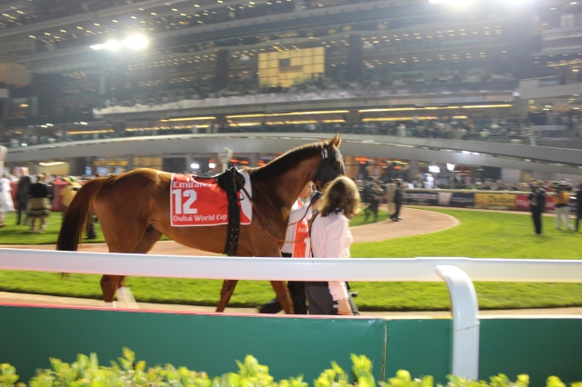 Animal Kingdom before winning the Dubai World Cup