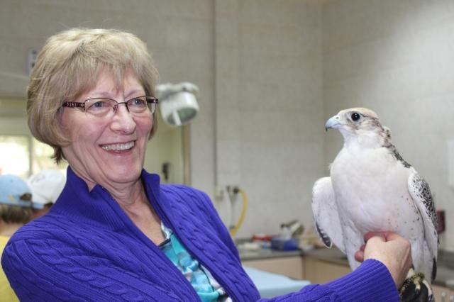 Mom petting the falcon