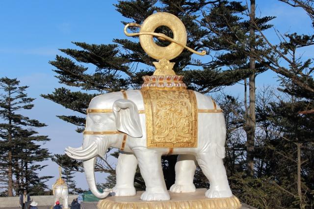 Elephant near summit