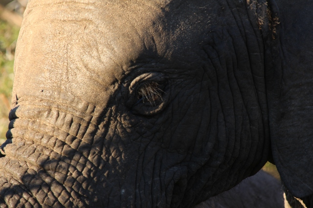 Up close with a pachyderm