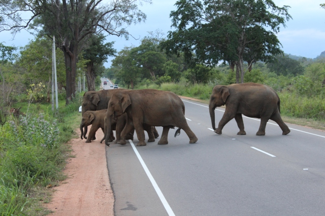 Elephant's Crossing the Road