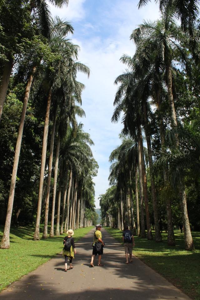 Strolling up Royal Palm Avenue