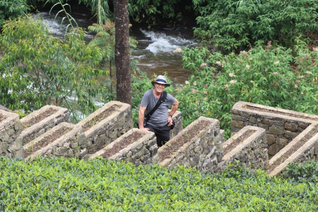 Uncle Steve at Labookellie Tea Estate