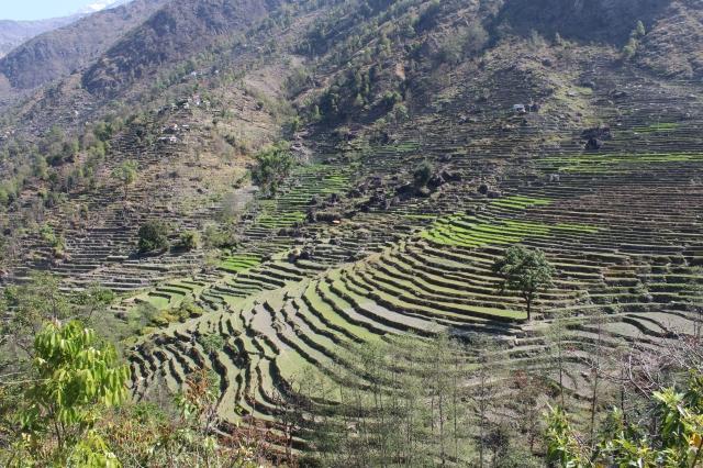 Terraced farming is everywhere