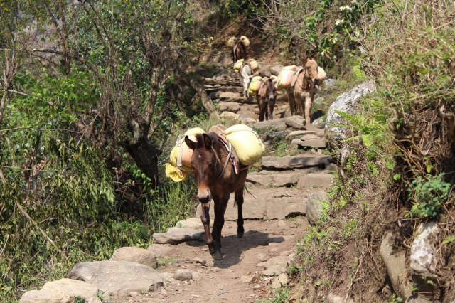 Donkey train (be sure to stand uphill as they pass!)