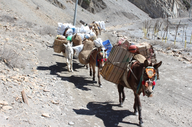 Another donkey train