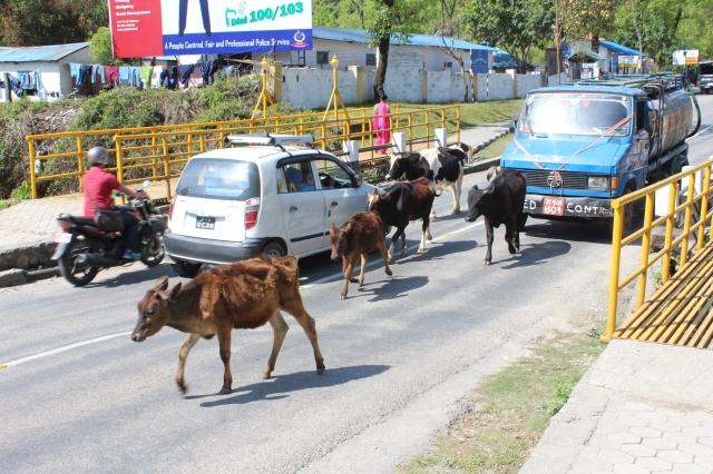 Traffic jam in Pokhara