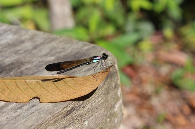 Dragonfly at trailhead