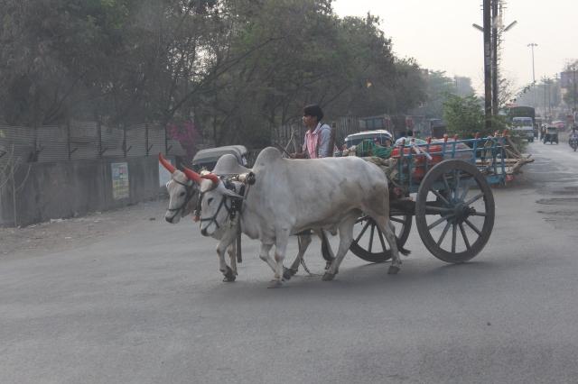 Cart in Jalgaon