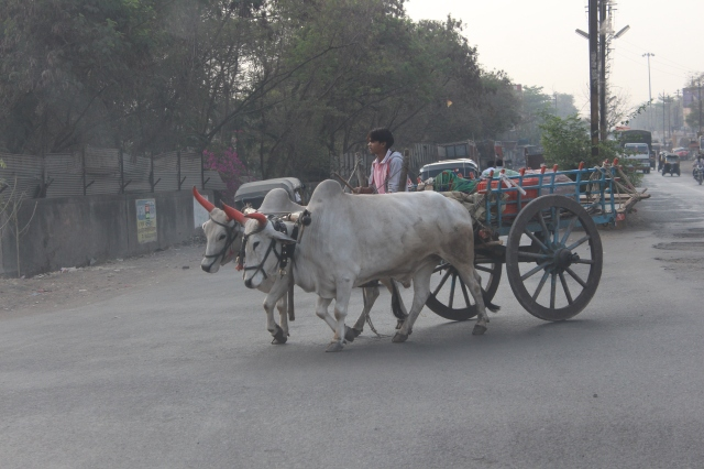 Cart in Jalgaon