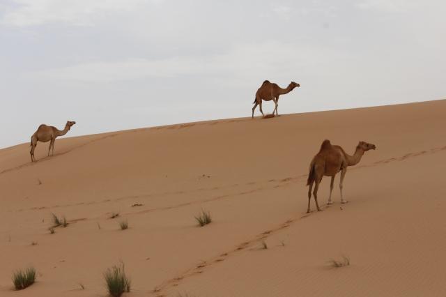 Desert traffic