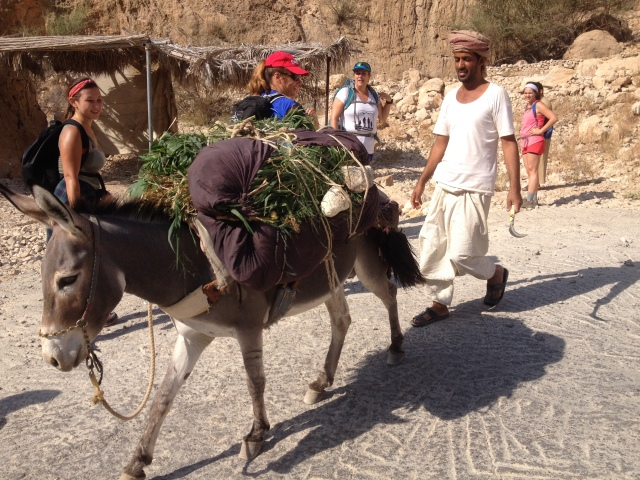 Farmer with his donkey